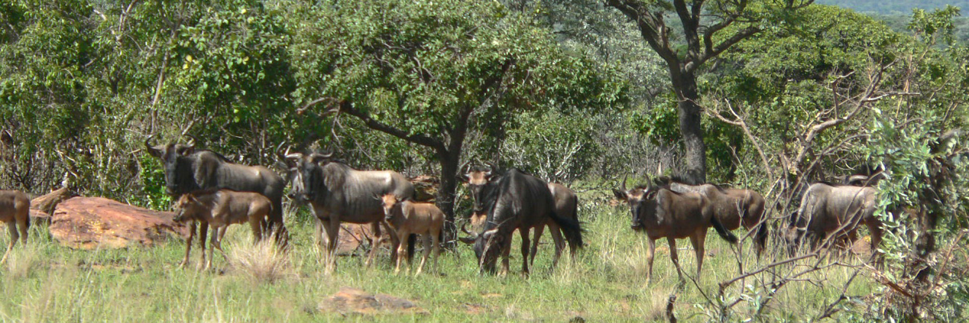 Animals at Izintaba Lodge